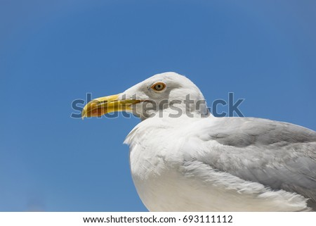 Profile portrait of the big seagull on the blue background #693111112