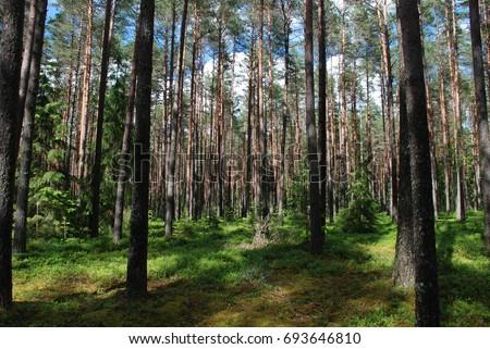 Woods #693646810