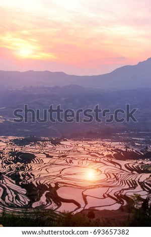 Terraced rice field in water season of Hani ethnic people in Yuanyang, Yunnan province, China.Sunset sky clouds. #693657382
