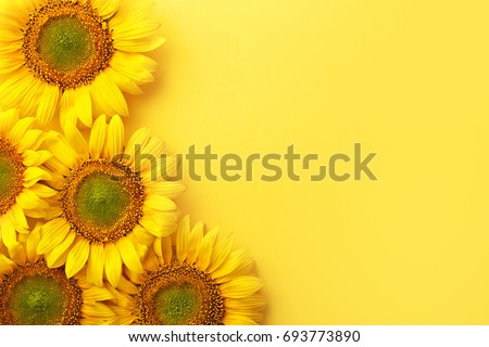 Sunflowers on a yellow background. Copy space. Top view #693773890