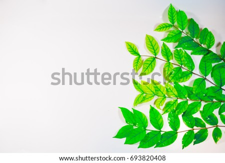 Green leaf with raindrops on white background  #693820408