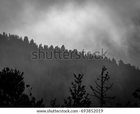 Tree line on misty Colorado morning #693852019