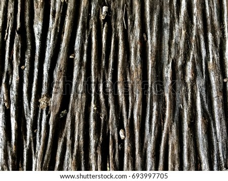 Wood bark surface and age of tree #693997705