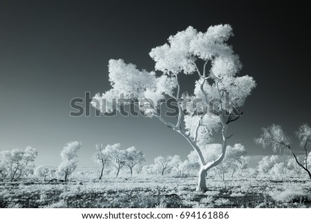 Australian Northern Territory outback Eucalyptus trees black and white infrared