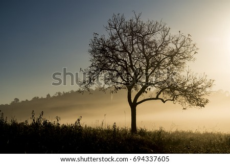 Silhouette Tree With morning light
