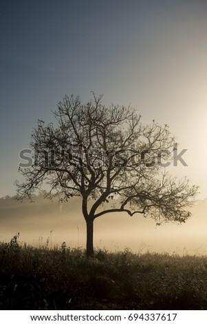Silhouette Tree With morning light #694337617