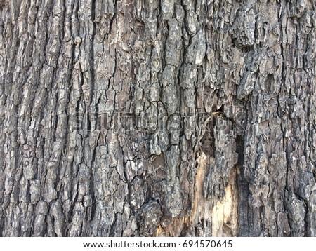 Wood skin background #694570645