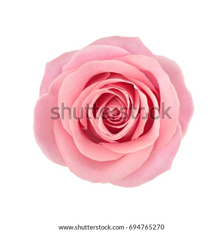 Coral rose flower. Detailed retouch #694765270
