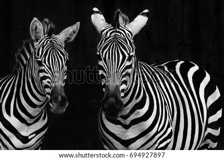 Zebras Royalty-Free Stock Photo #694927897