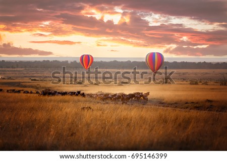 Sunrise over the Masai Mara, with a pair of low-flying hot air balloons and a herd of wildebeest below in the typical red oat grass of the region. In Kenya during the annual Great Migration. #695146399