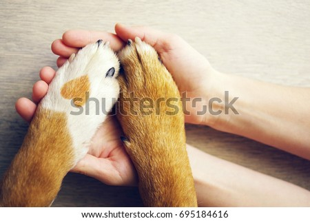 Dog paws with a spot in the form of heart and human hand close up, top view. Conceptual image of friendship, trust, love, the help between the person and a dog Royalty-Free Stock Photo #695184616