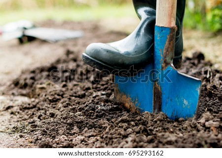 Worker digs the black soil with shovel  in the vegetable garden, man loosens dirt in the farmland, agriculture and tough work concept #695293162