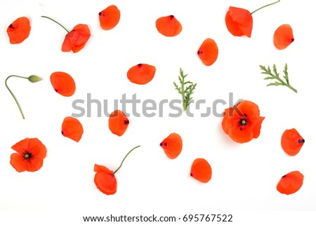 Red poppies petals pattern on white background. Top view, flat lay #695767522