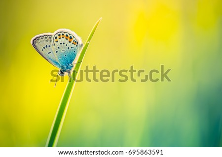 Nature background concept. Bright summer spring meadow with a butterfly banner design.
