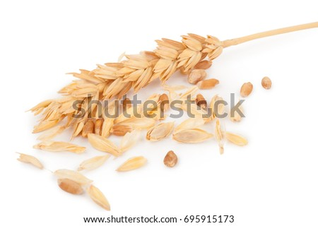 Ear of wheat and wheat grains #695915173