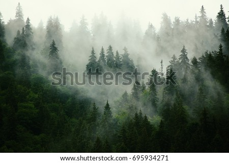Misty landscape with fir forest in hipster vintage retro style #695934271