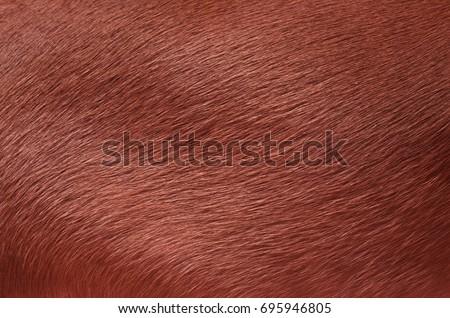 Dog fur. Animal fur texture. Fur fees. Short fur #695946805