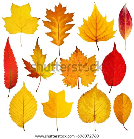 collection beautiful colorful autumn leaves isolated on white background #696072760