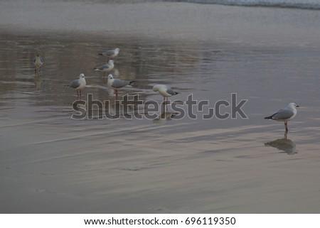 seagulls #696119350