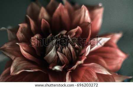Red mauve dahlia green background image photograph close up macro detailed leaves petals beautiful garden floral flower pretty different white several lovely gazing looking one