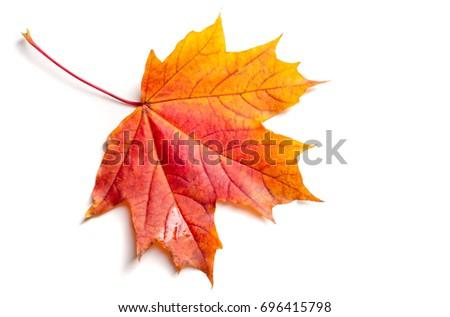Texture, background, pattern. Autumn maple leaves. Background of maple leaves. Red and yellow maple leaves Autumn advance; Autumn motive #696415798