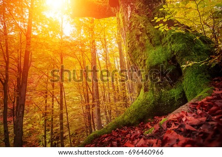 colorful autumn trees in forest.  natural background . picture with soft focus effect
