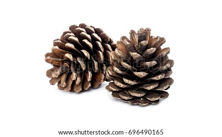 Pine cone on white background Royalty-Free Stock Photo #696490165