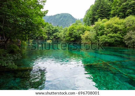 Peacock lake, one of the largest lake in Jiuzhaigou national park. Shape of lake, when view from above, will look like a peacock. #696708001