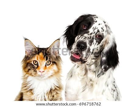 Dog and cat portrait #696718762
