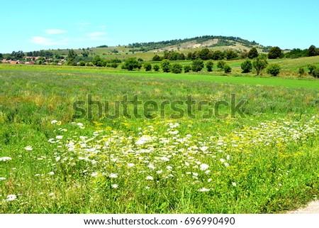 Rural landscape in the plains of Transylvania, Romania. Green landscape in midsummer, in a sunny da. #696990490