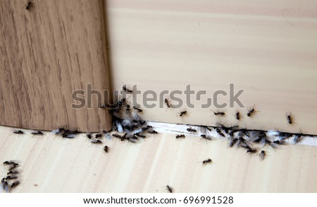 Ants in the house on the baseboards and wall angle #696991528