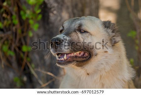 dog #697012579