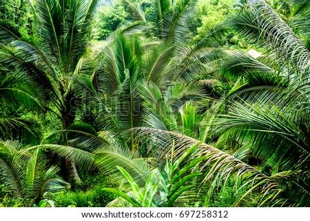 Jungle Jungle #697258312
