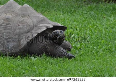 Galapagos Tortoise #697263325
