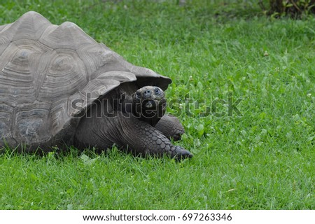 Galapagos Tortoise #697263346