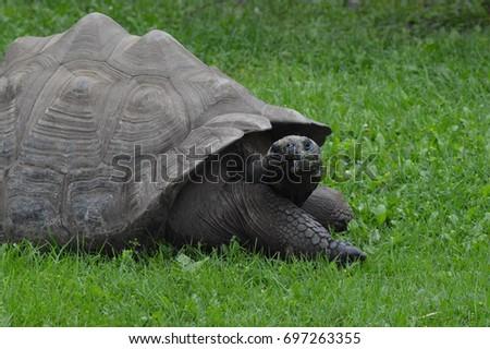 Galapagos Tortoise #697263355