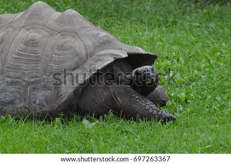 Galapagos Tortoise #697263367