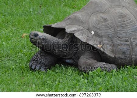 Galapagos Tortoise #697263379