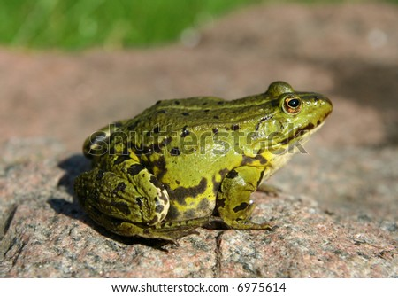 frog #6975614