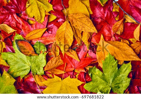 background of autumn leaves. Autumn background #697681822
