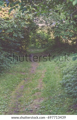 dark gravel pathway road in evening forest with low light effect in green summer - vintage film look #697713439