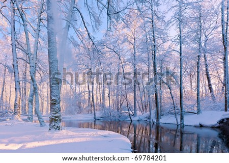 forest covered with snow Royalty-Free Stock Photo #69784201