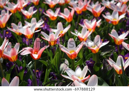 Flowers #697888129