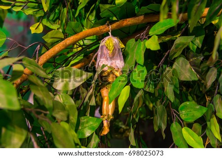 Tree bearing fruits in the shape of girls  #698025073