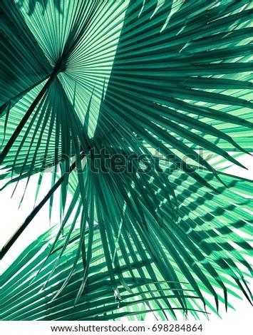 tropical palm foliage on white background #698284864