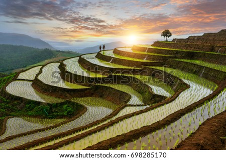 Pa-pong-peang rice terrace north Thailand #698285170