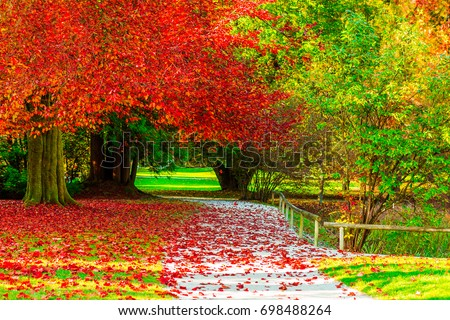 Amazing golden autumn colors in the forest path track. Autumn Collection #698488264