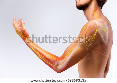 Illustration of the human arm anatomy representing nerves, bones and ligaments. #698593135