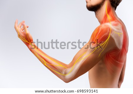 Illustration of the human arm anatomy representing nerves, bones and ligaments. Royalty-Free Stock Photo #698593141