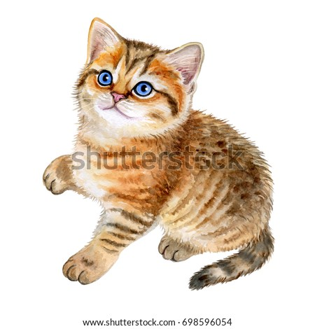Cute British kitten with blue eyes isolated on white background. Watercolor Illustration. Template. Clip-art